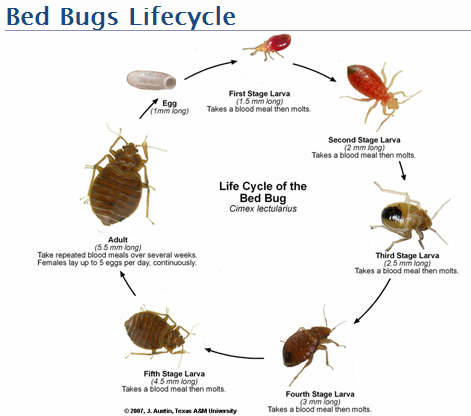 Health Services Bed Bug Information